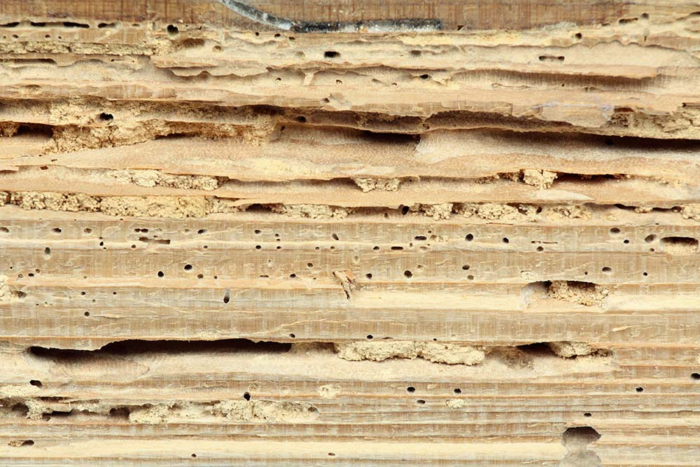 Termite damage on wood seen while preforming home inspection services